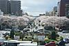 Sakura140405_3