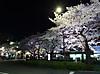 Sakura180326_2
