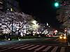Sakura180326_3