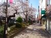 Sakura200325_2