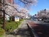 Sakura200325_3