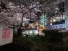Sakura210325_4